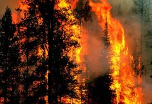 bakar hutan