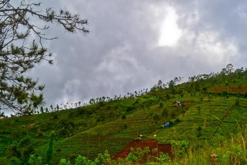 View Dari Gunung Cikuray